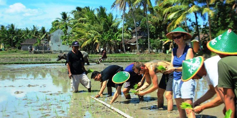 Bertani Jadi Atraksi Wisata Menarik di Desa Candran