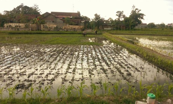Perjuangan Desa Di Bantul Untuk Bertani Organik