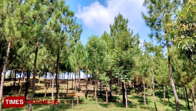 Bumi Perkemahan Pasir Parat Cirebon, Tawarkan Wisata Alam Asri