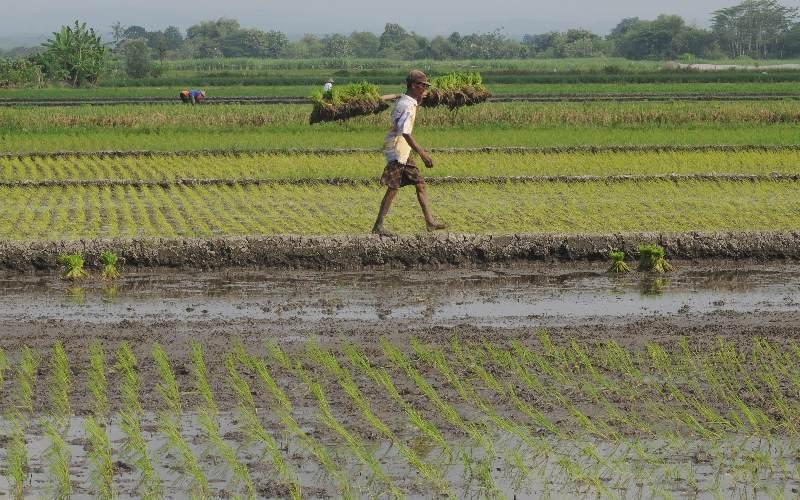Orang Kota Panik Resesi, Orang Desa Sibuk Bertani.