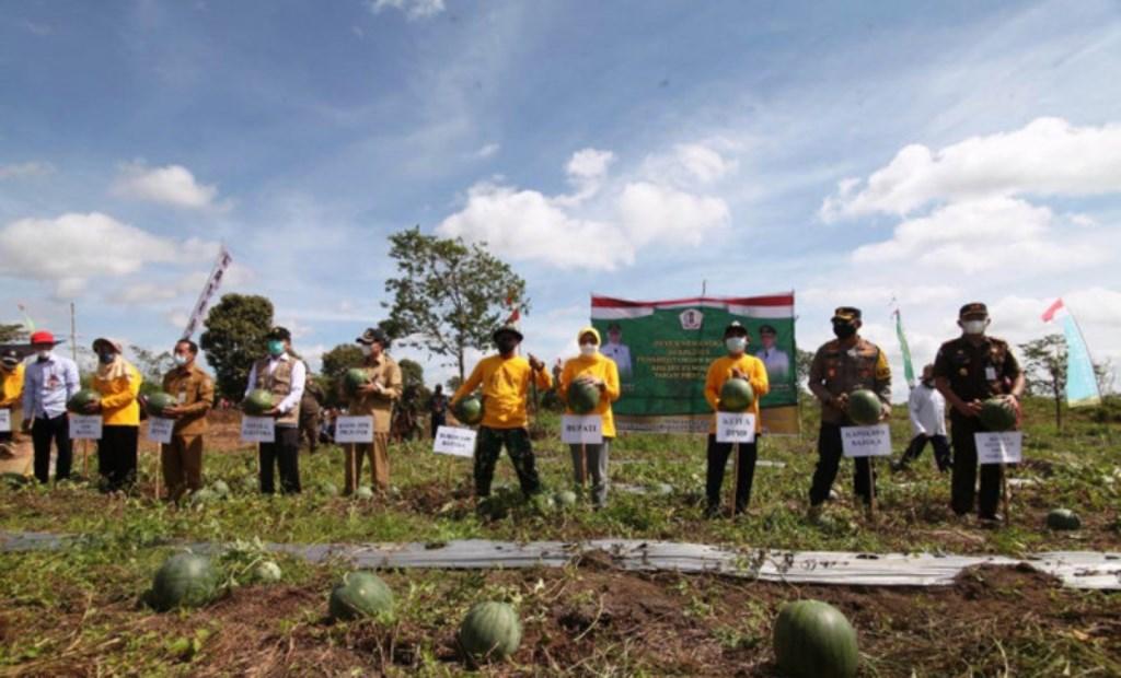 Petani di Kalsel Kembangkan Sentra Pertanian Semangka